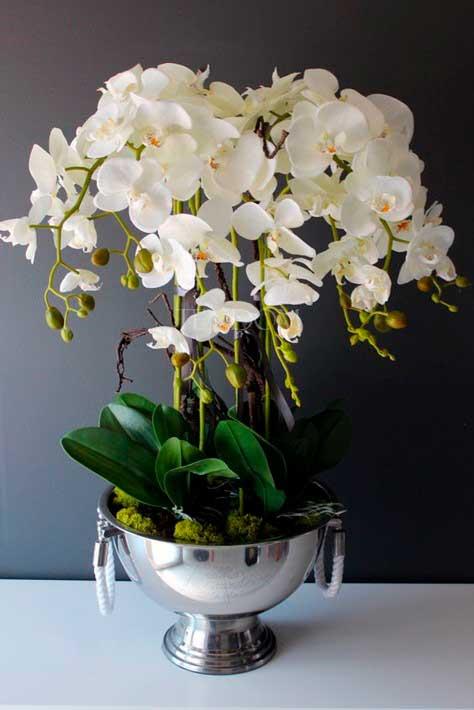 Orchids-(blog-3)